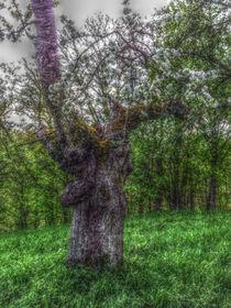 Apfelbaum im Maerchenwald by sabiho