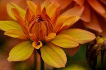 Flower von Nina Bo