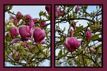 Pink Magnolia by Claudia Evans