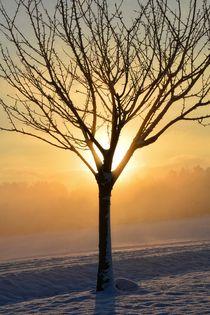 Sonnenaufgang im Winter von Claudia Evans