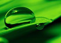 Grüne Perle von Gabi Siebenhühner