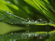 Wassertropfen von Gabi Siebenhühner