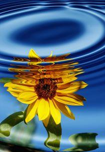 Sonnenblume mit Wasserringe von Claudia Evans