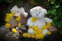 Die Löwenzahn Teddy`s von Claudia Evans