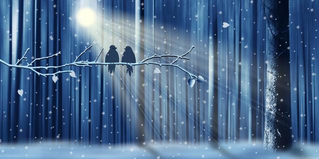 Winter-voegel