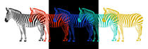 Zebras in Pop-Art von Monika Juengling