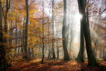 Sonnenstrahlen im Herbstwald - Sun rays in a forest by Katho Menden