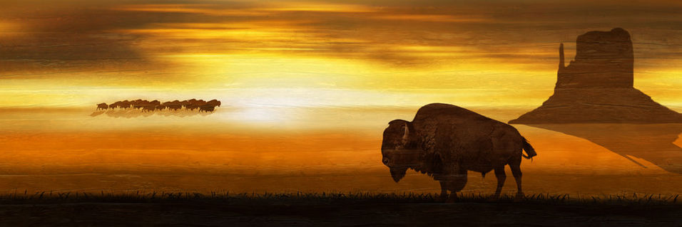 Western-bison-pano