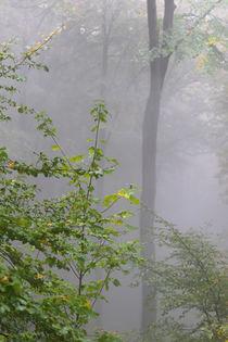 'Nebelwald im Herbst' von Bernhard Kaiser