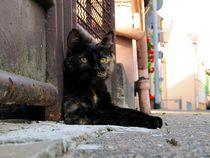 Katze von Anke Tarabay