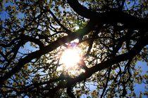Sonne von Anke Tarabay