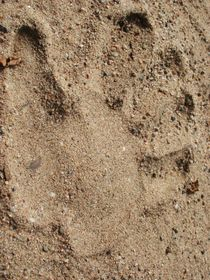 Handabdruck im Sand von Anke Tarabay