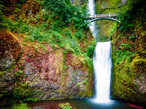 Bridge over waterfall full with green leaves and water pool by Sharon Yanai