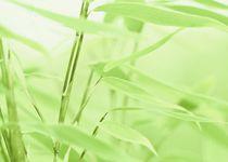 Bambusblätter by Gabi Siebenhühner