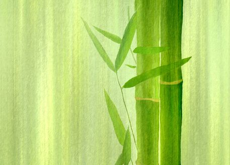 Bambus-rechts