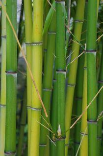 Bambusstäbe von Gabi Siebenhühner