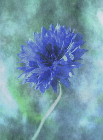 blaue Kornblume by sabiho