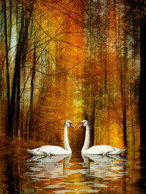 Swan lake - Love in autumn von Chris Berger