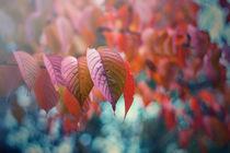 Der Herbst blüht