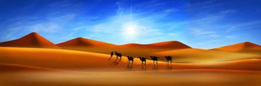 Kamele-wueste-pano