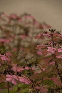Hortensien im Herbst von ysanne