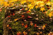 Ahorn, Blätter, Moos von ysanne