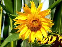 sunny flowerpower von Zarahzeta ®