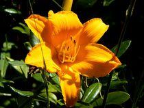 yellow flowerpower von Zarahzeta ®