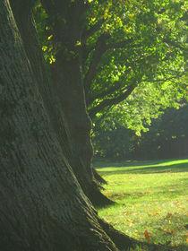 Bäume von marionata