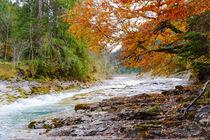 Last fall days by Thomas Matzl