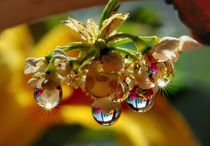 Multicolored drops von Yuri Hope