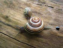 Snails von Sabine Cox