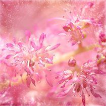 Rosa Blüten von Gabi Siebenhühner