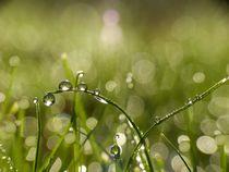 Regentropfen by Gabi Siebenhühner