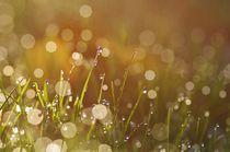 Regentropfen im Gegenlicht by Gabi Siebenhühner