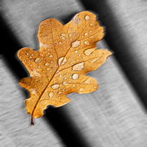 Water drops on a leaf von Michael Naegele