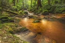 Fluß im Wald von Michael Wallisch