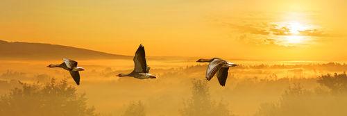 Flug-wildgaense2