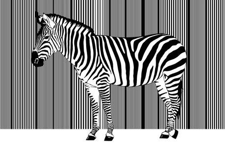 Zebra-barcode-einzelnd