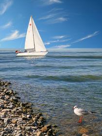 Segelboot und Möwe an der Küste von Monika Juengling