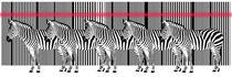 Zebra Barcode Laser von Monika Juengling