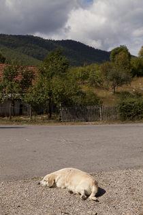 Siesta in Kuterevo #2 by Steffen Krahl