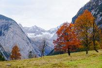 'Schönster Herbst' von Thomas Matzl