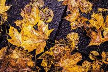 Herbstlauf von Mariano von Plocki
