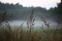 Gras im Herbstnebel gefangen  by Simone Marsig
