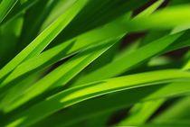 Gras von Gabi Siebenhühner