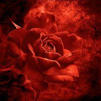 Rote Rose von Gabi Siebenhühner