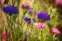 Kornblumen von Gabi Siebenhühner