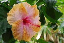 Exotische Blüte von Gabi Siebenhühner