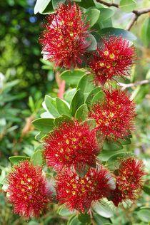 Exotische Blüten von Gabi Siebenhühner